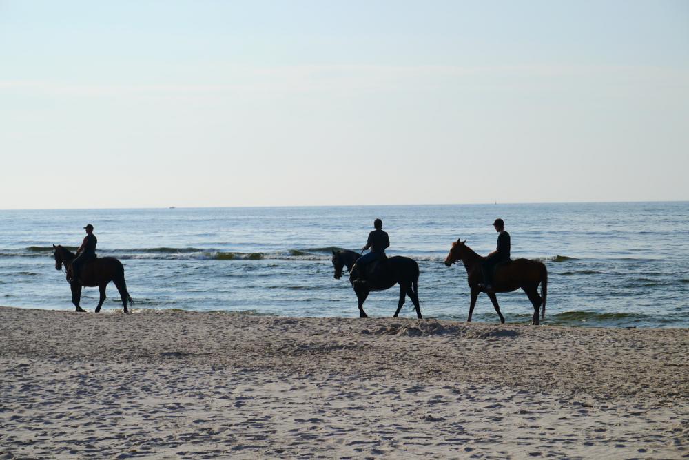 Stadnina koni Łeba