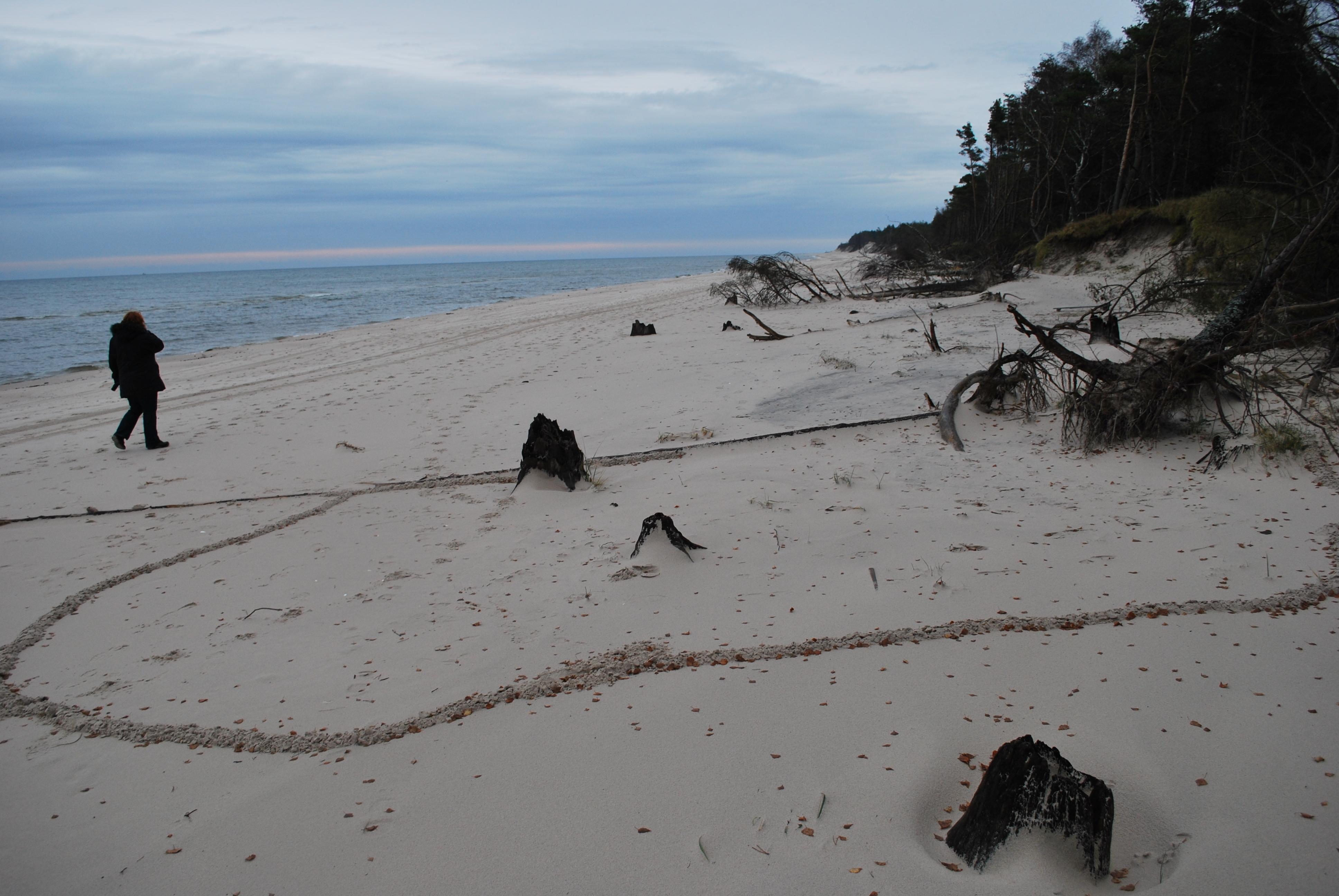 Słowiński Park Narodowy krety na plaży